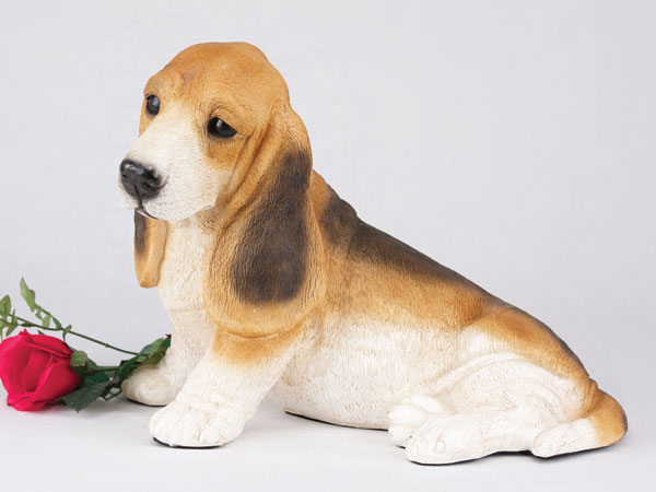 Basset Hound, Tri-Color