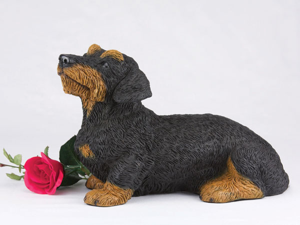 Dachshund, Wirehaired, Black & Tan