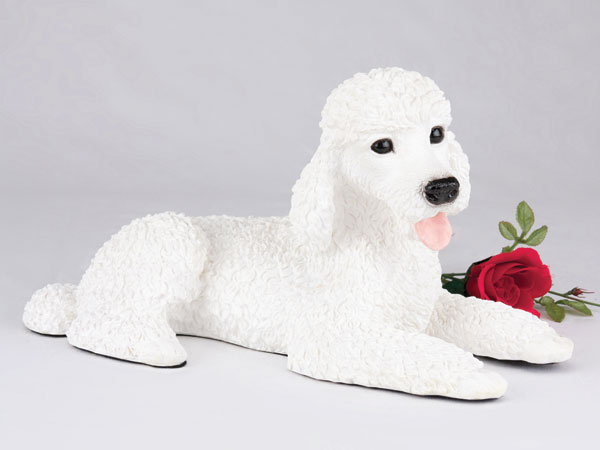 Poodle, Standard, White
